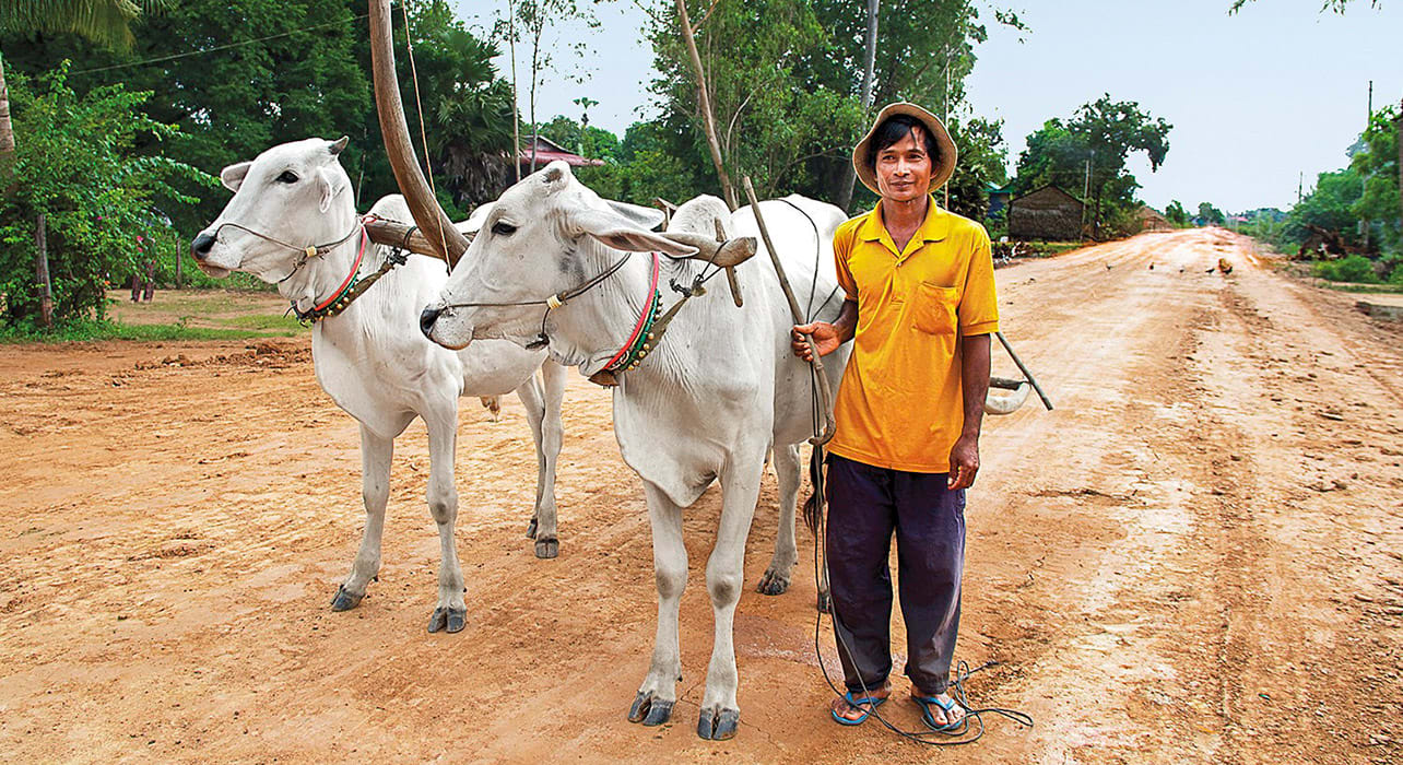 man with ox cart