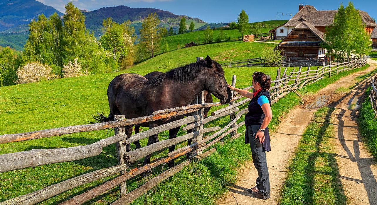 bran transylvania romania hiker horse countryside
