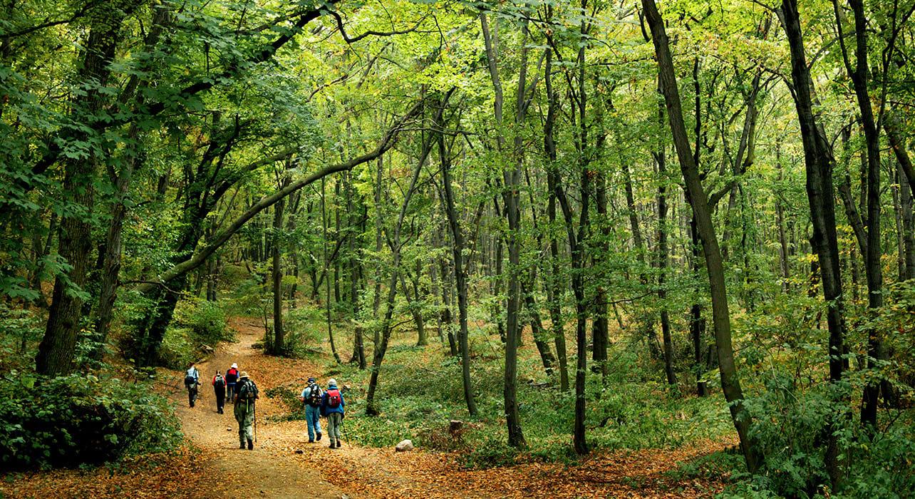 4 slide czech palava woods hikers pano