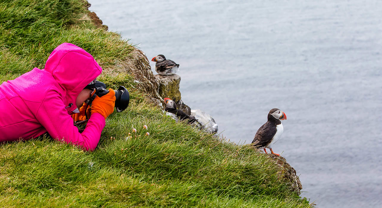 atlantic puffin faroe islands
