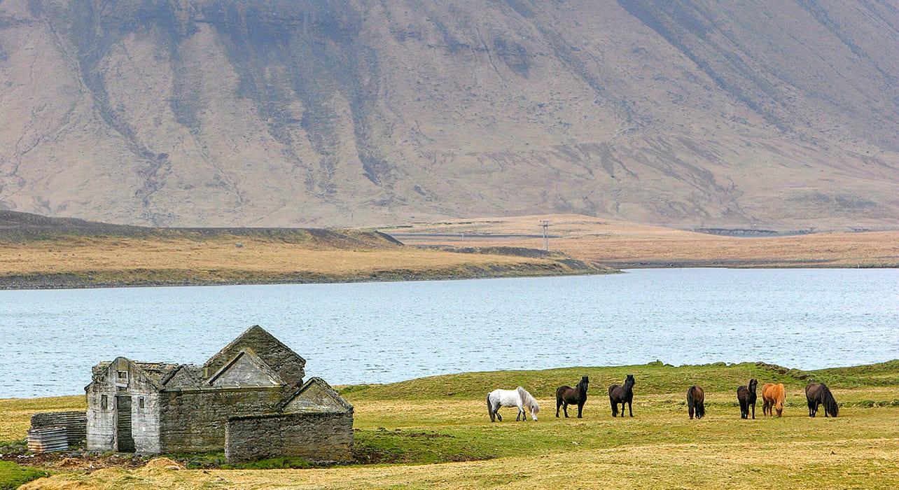 iceland vista ruins horses
