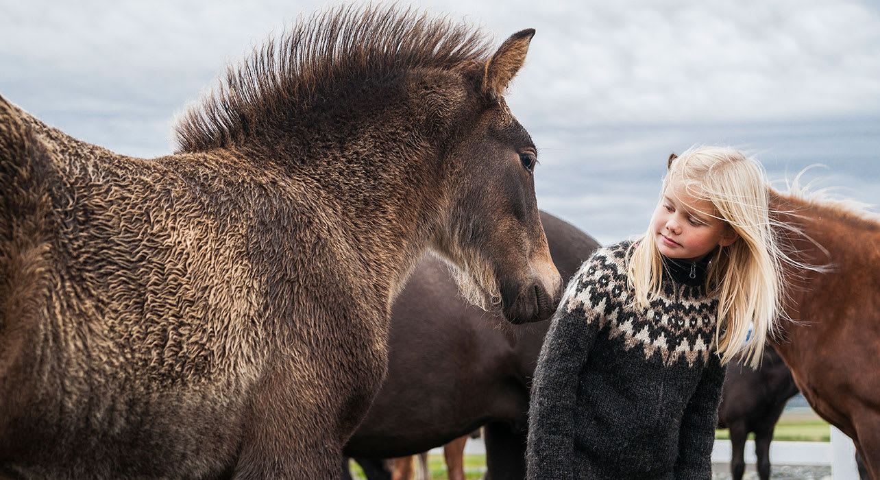 icelandic horse girl