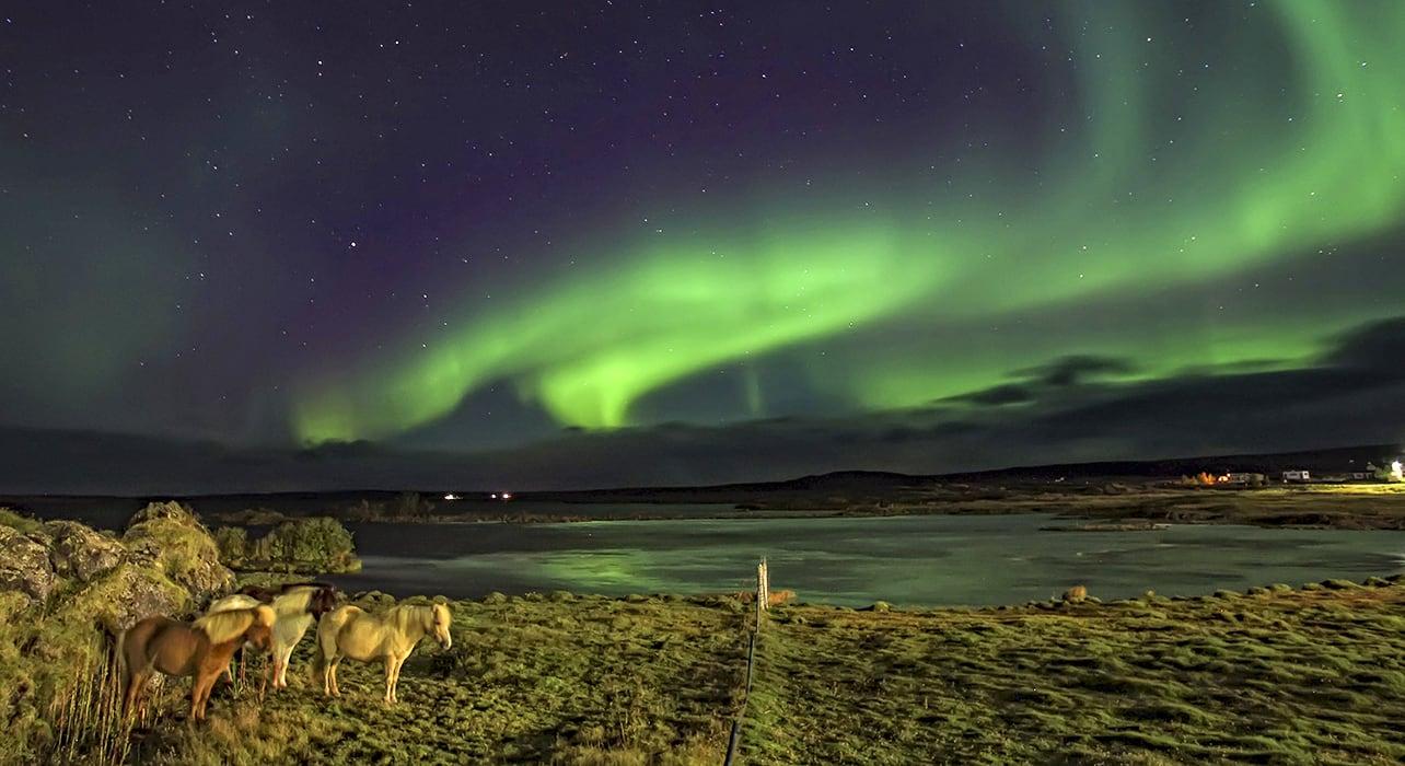 iceland aurora borealis icelandi horses lak myvatn