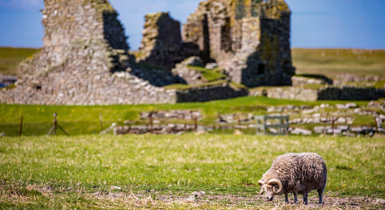sdublin to reykjavik lerwick ruins sheep