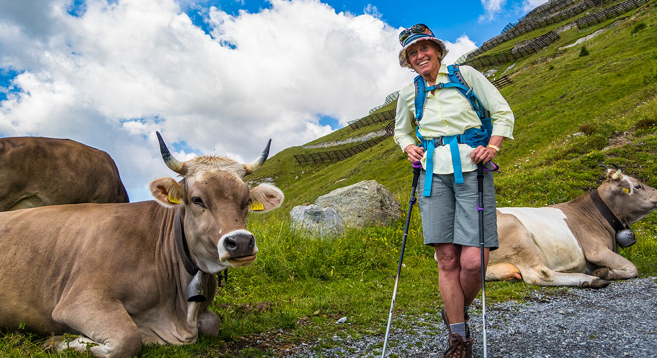 alps eirope hiker cow happy weissfluhjoch