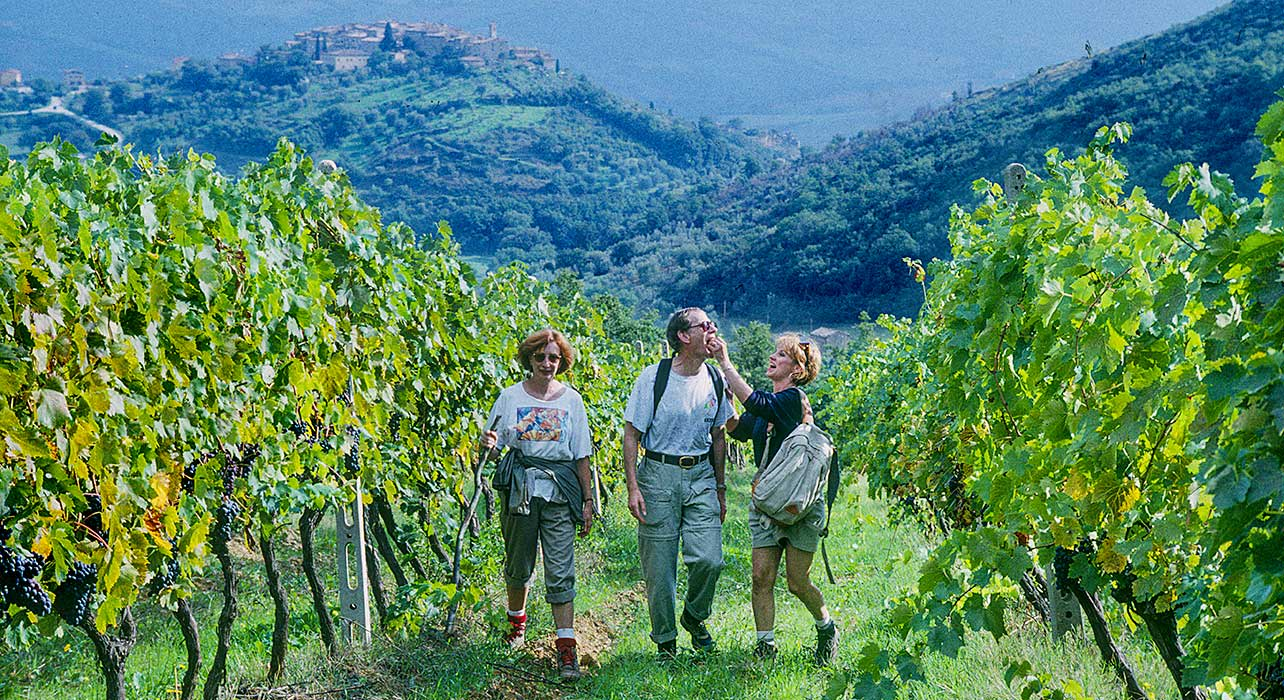 italy vineyard fun wine tuscany
