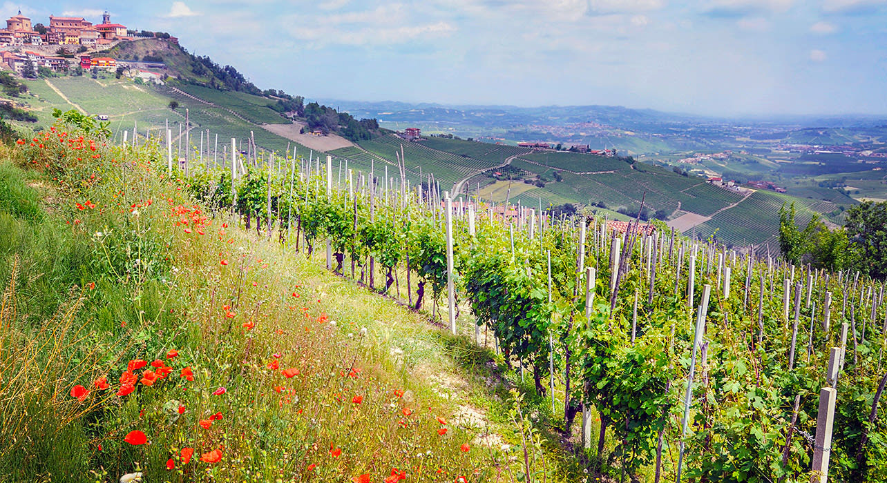 The Kingdom of Truffles and Barolo | Wilderness Travel