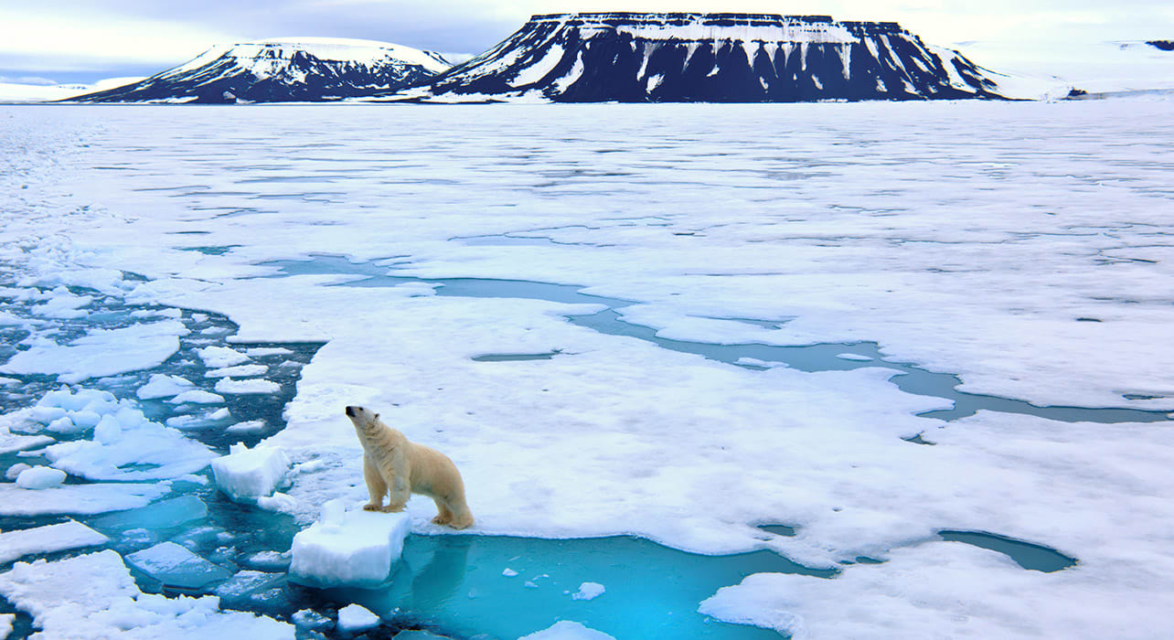 svalbard islands polar bear