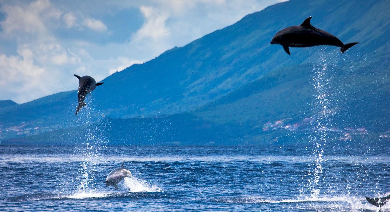 3 slide portigal dolphin pano