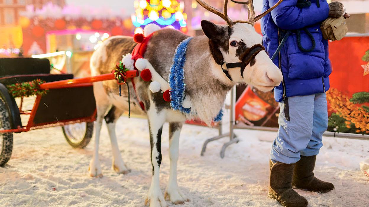 russia st petersburg christmas reindeer