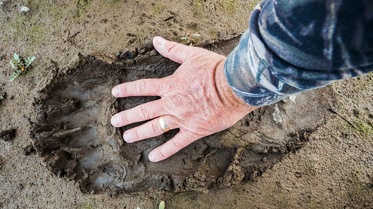 alaska man comparing hand to bear footprint