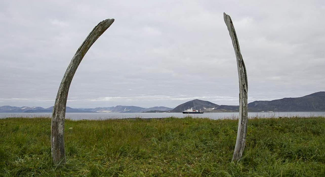 bones wrangel island landscape