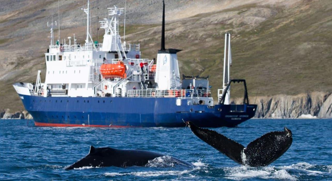 whale wrangel island