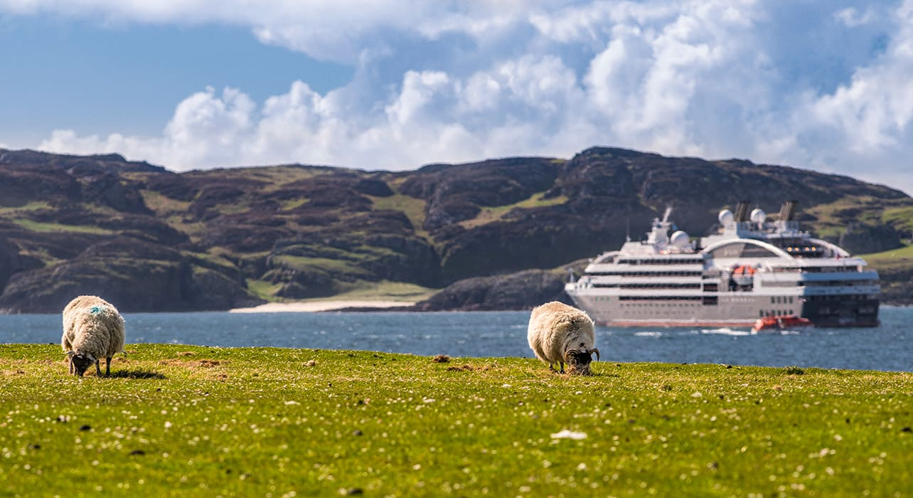 tobermory sheep cruise ship