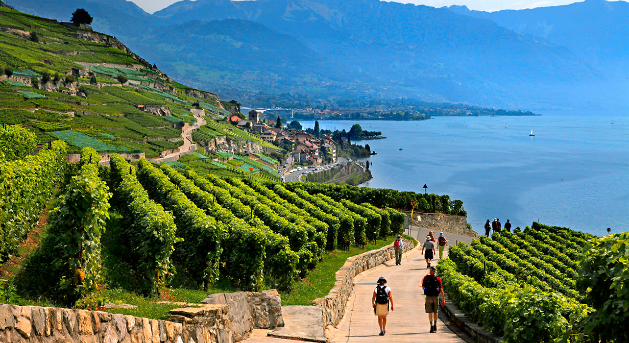 montreaux st saphorin vineyards hikers