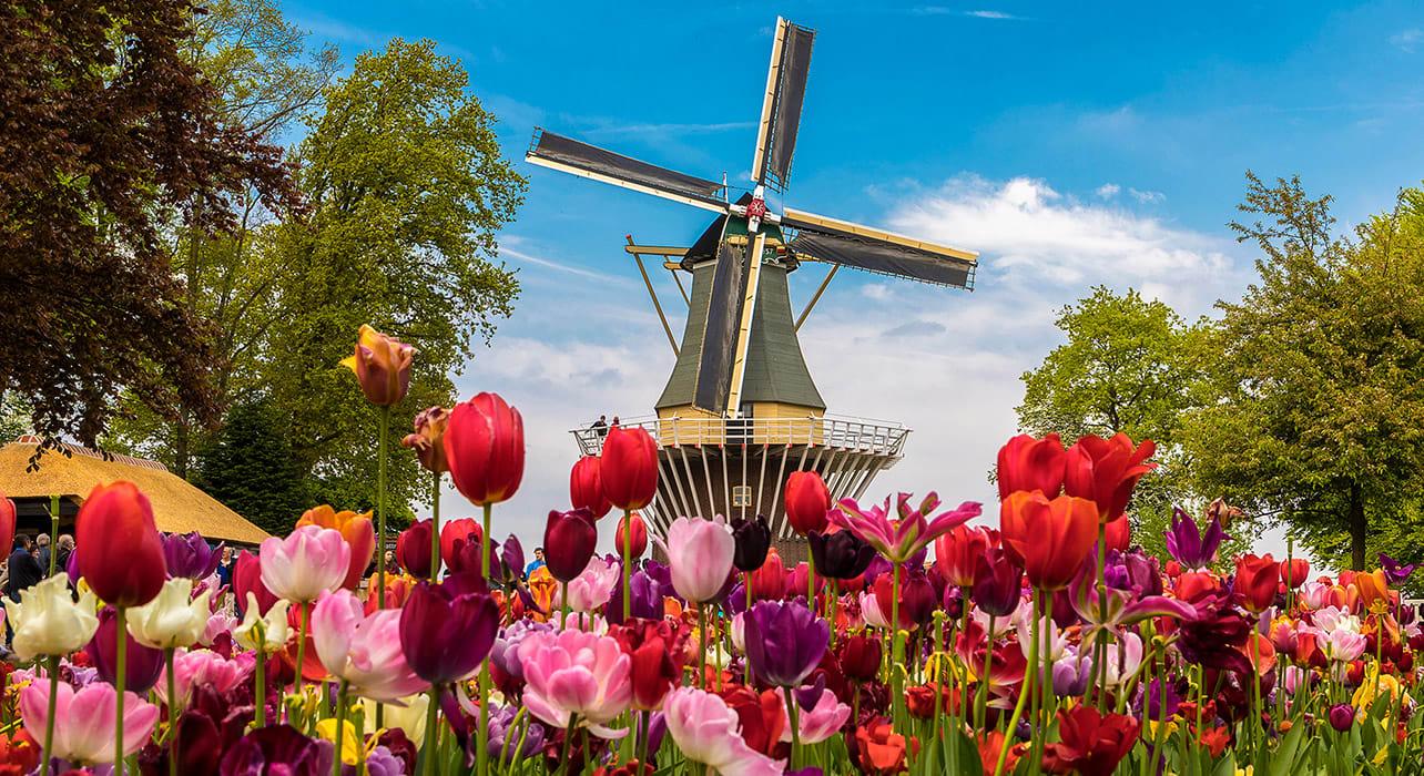 netherlands keukenhof windmill tulips
