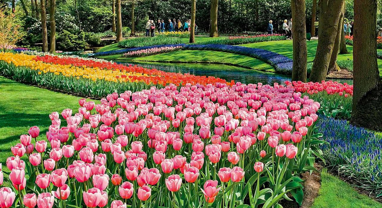 netherlands keukenhof gardens tulips
