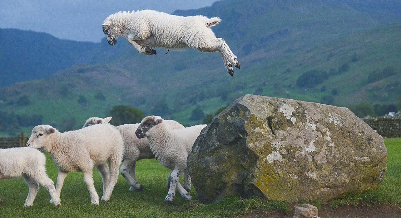 6 slide wales sheep pano