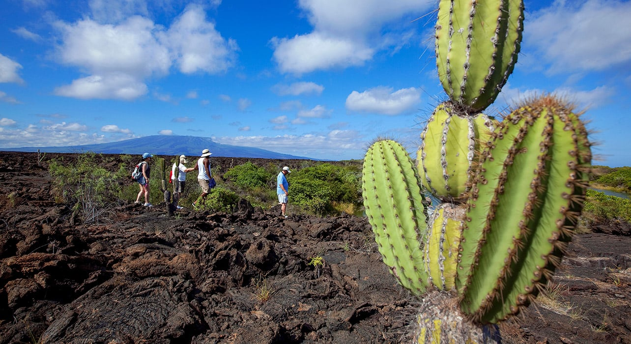 enchanted galapagos isabela island puente moreno tourists hiking cactus