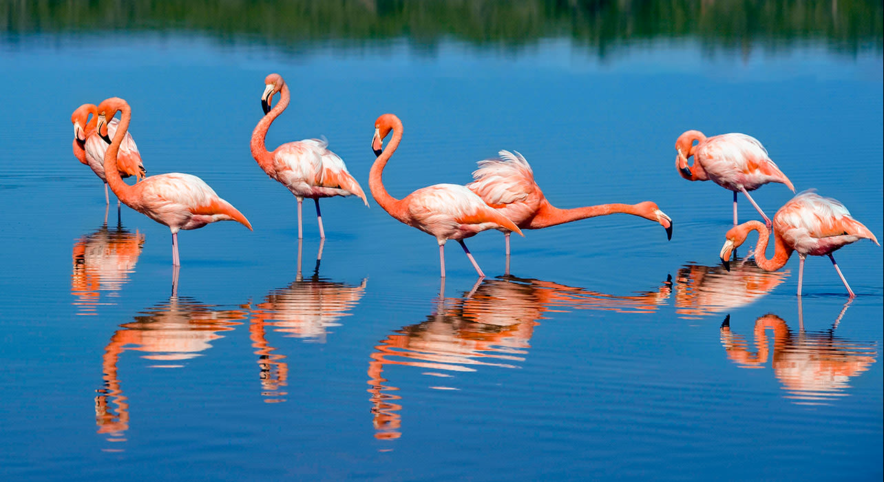 enchanted galapagos flamingos