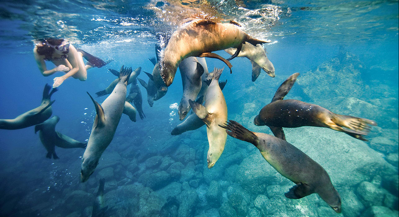 3 slide galapagos adventure woman swimming with sea lions pano