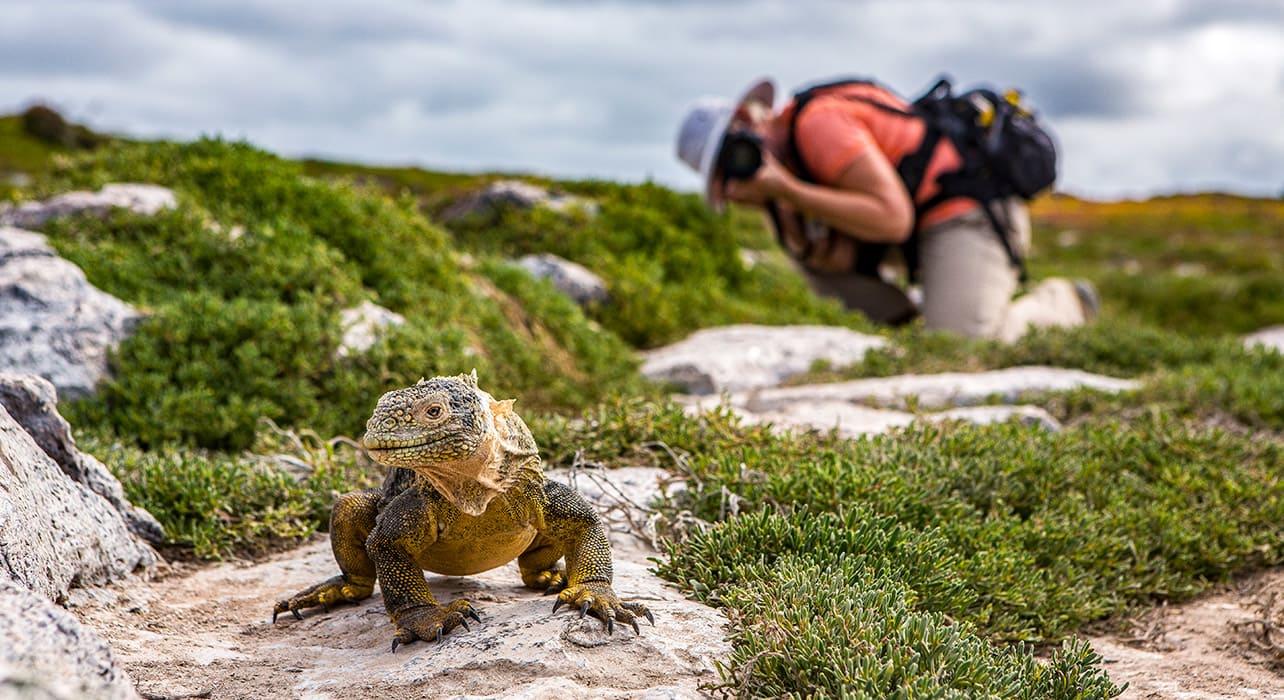 1 slide galapagos south plaza island tourist photographing iguana pano