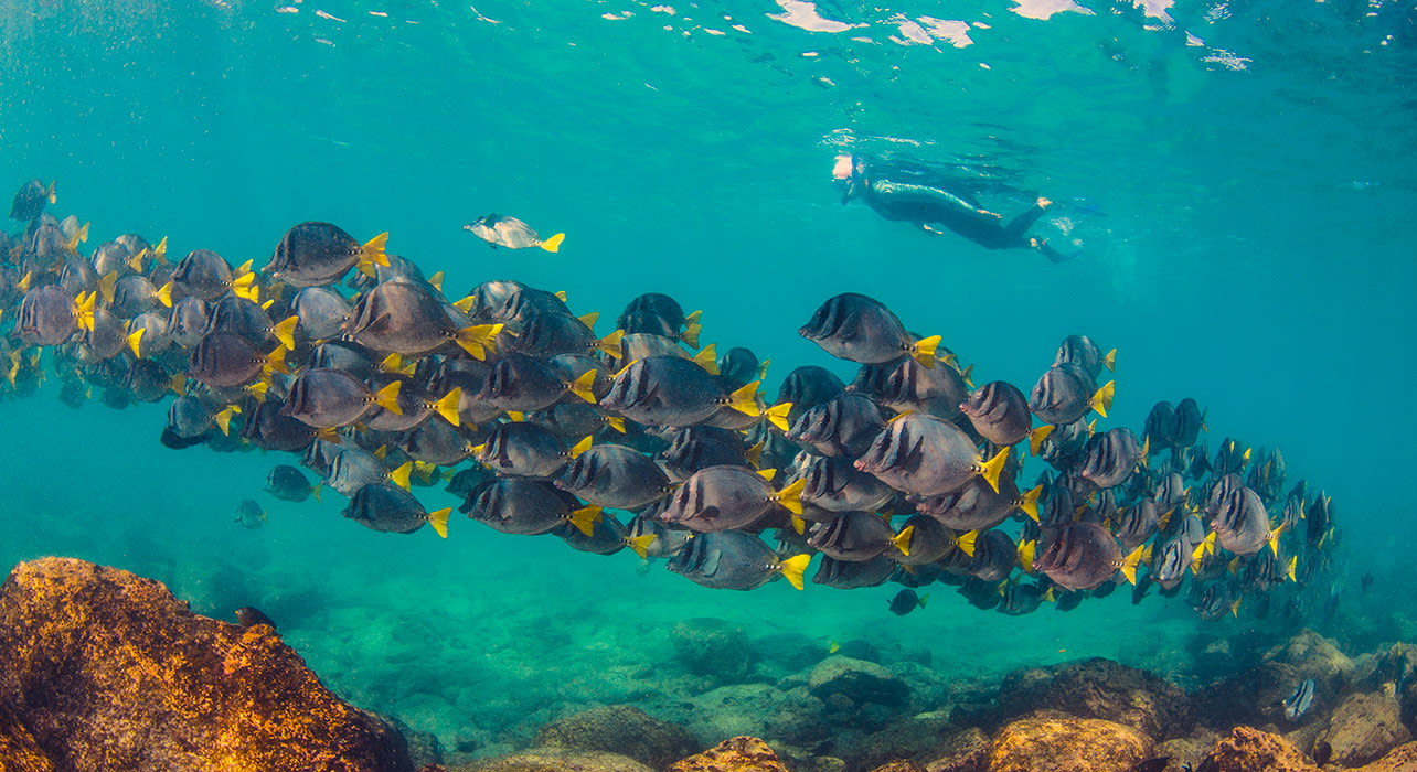 galapagos snorkeling with school of fish