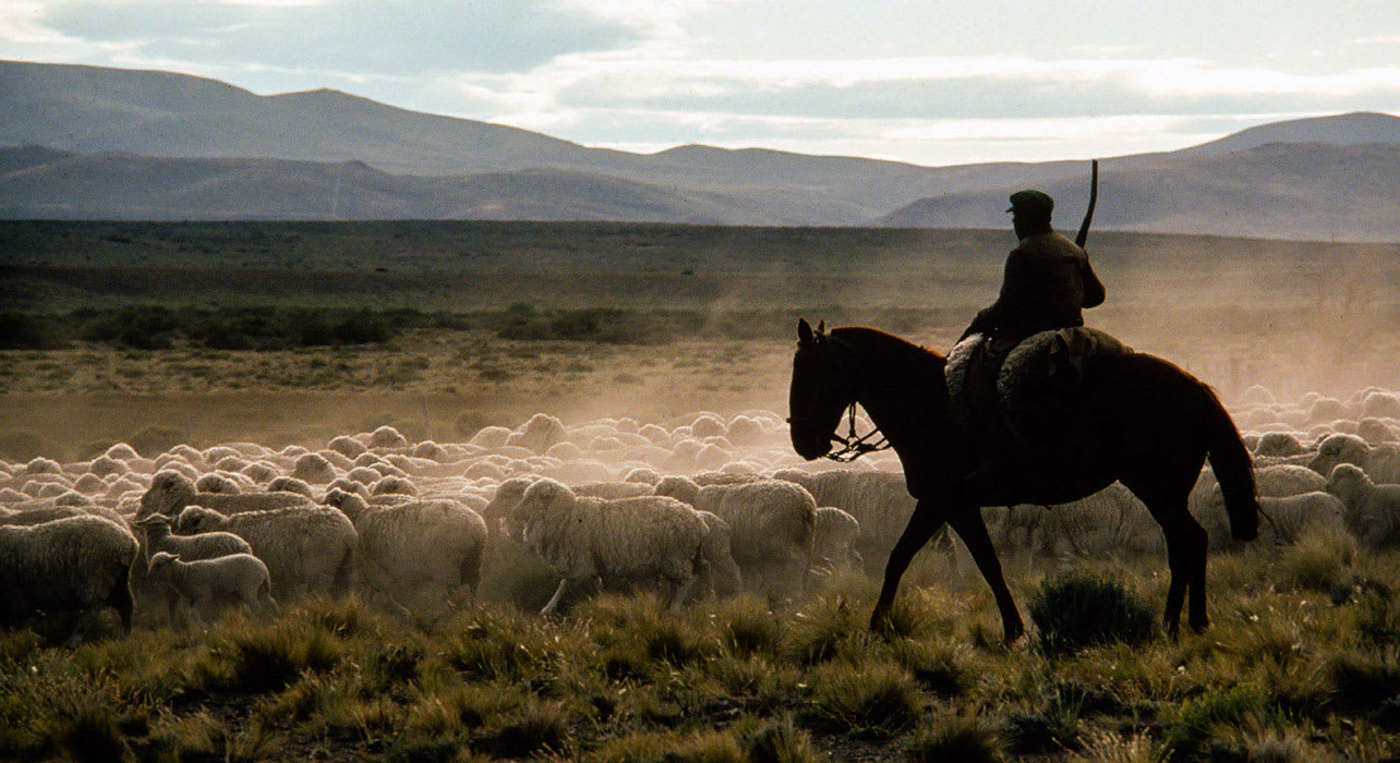 3 slide patagonia gaucho herding sheep pano