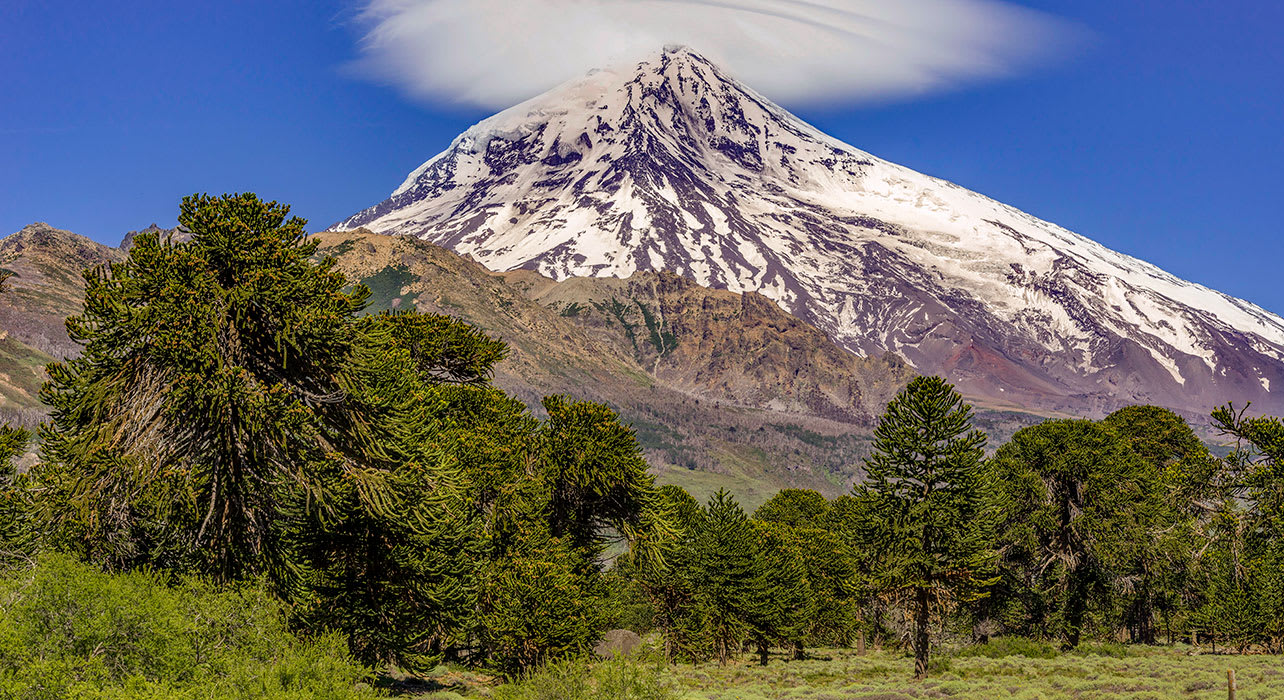 argentina chile volcano lanin araucaria monkey puzzle tree