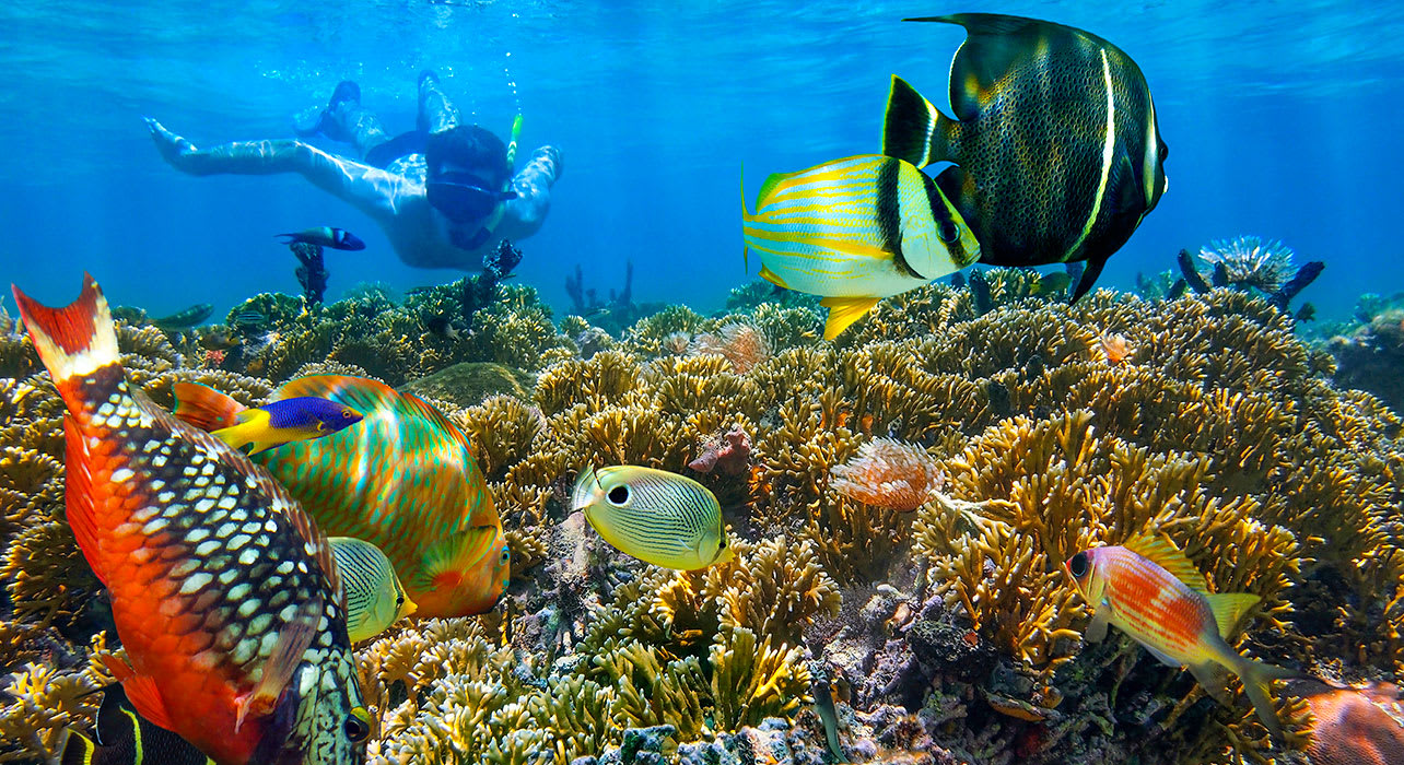 1 slide man snorkeling with colorful fish pano