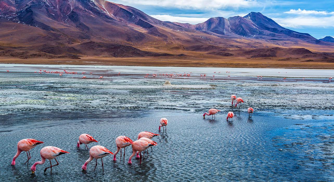bolivia salar de uyuni flamingo