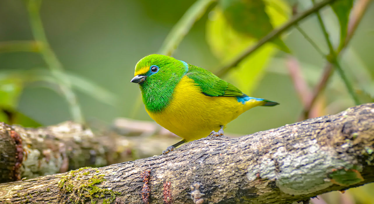 santa marta colombia bird jungle