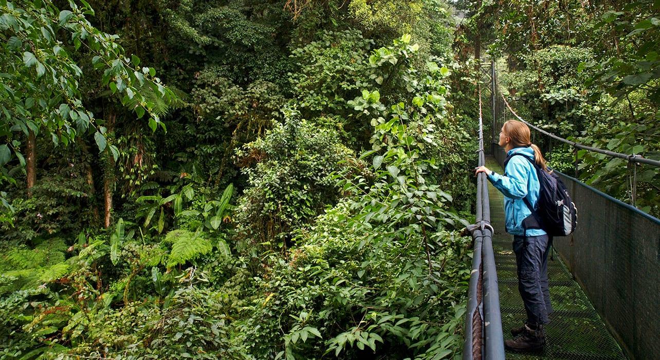 monte verde costa rica canopy walkway