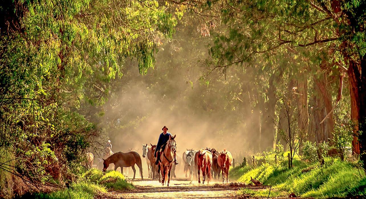 hacienda cusin ecuador horses