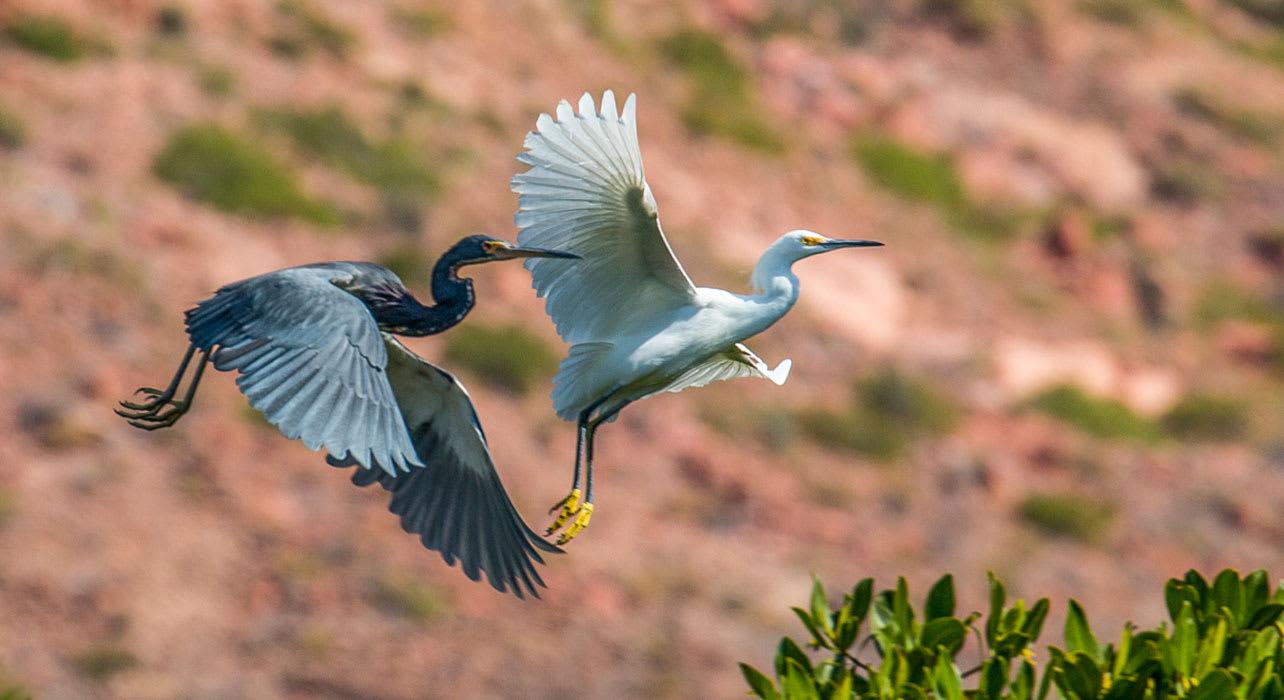 mexico birds flight wildlife