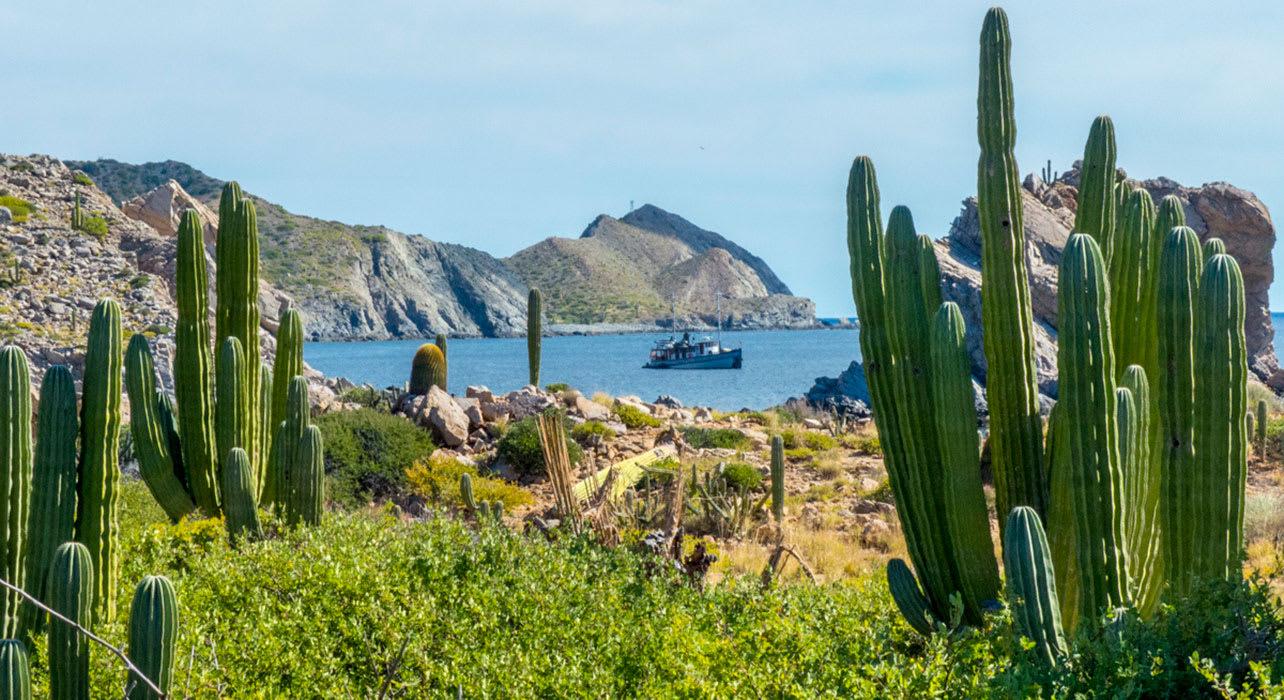 baja cactus boat