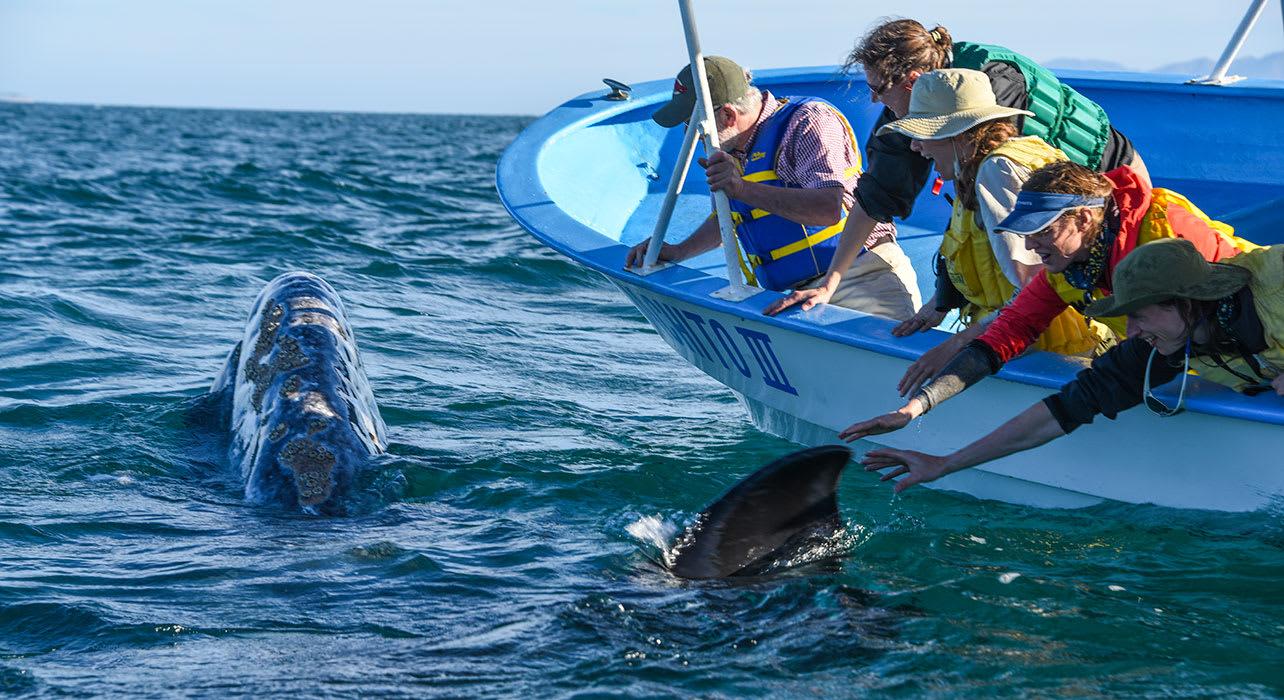 baja whale watch mexico