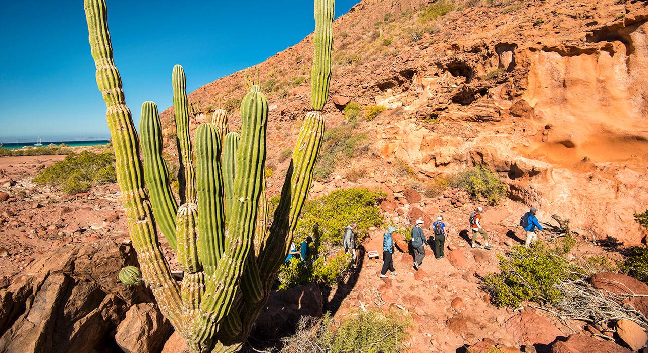 baja cactus sea