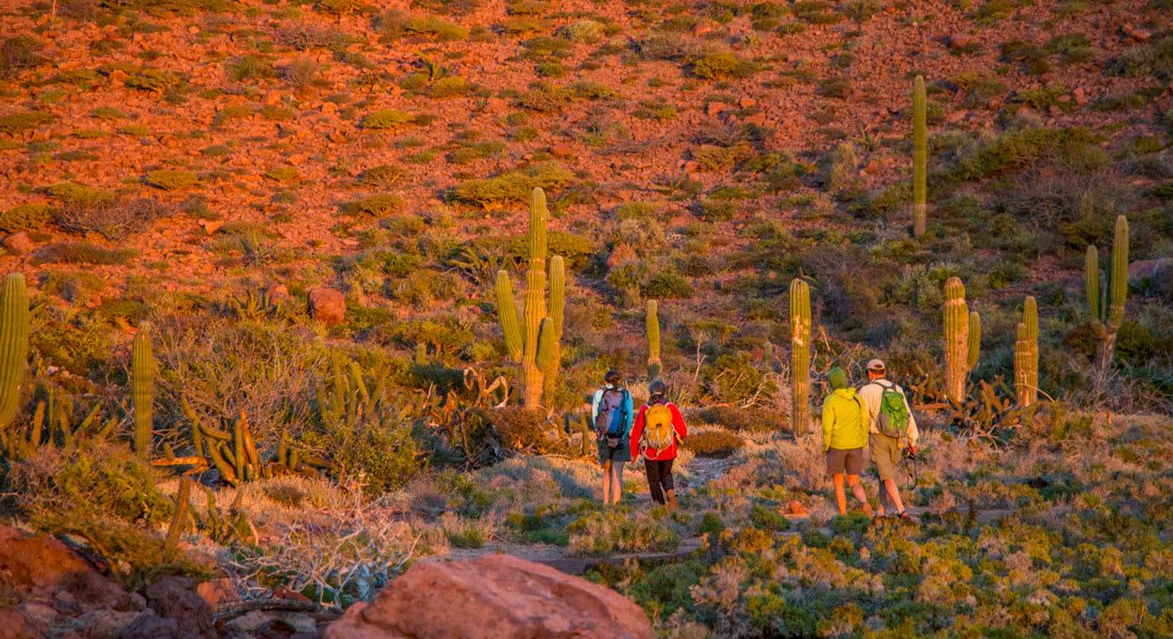 baja hiking cactus