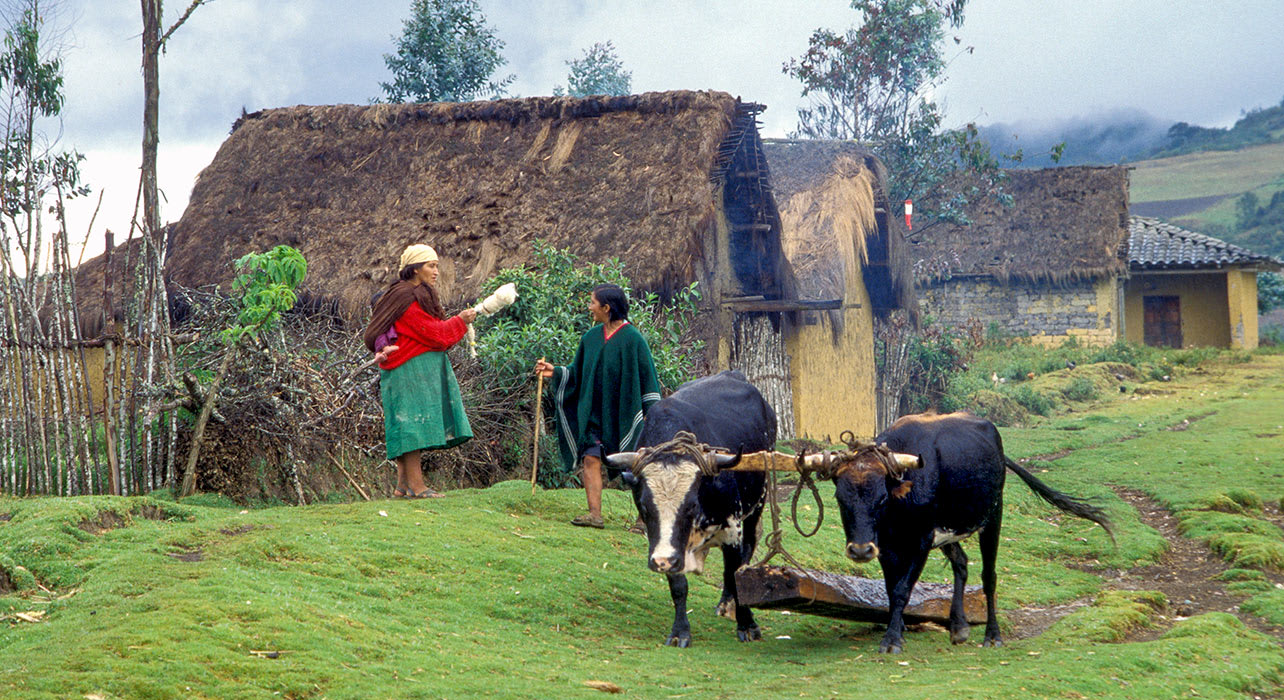 peru chachapoyas people cattle