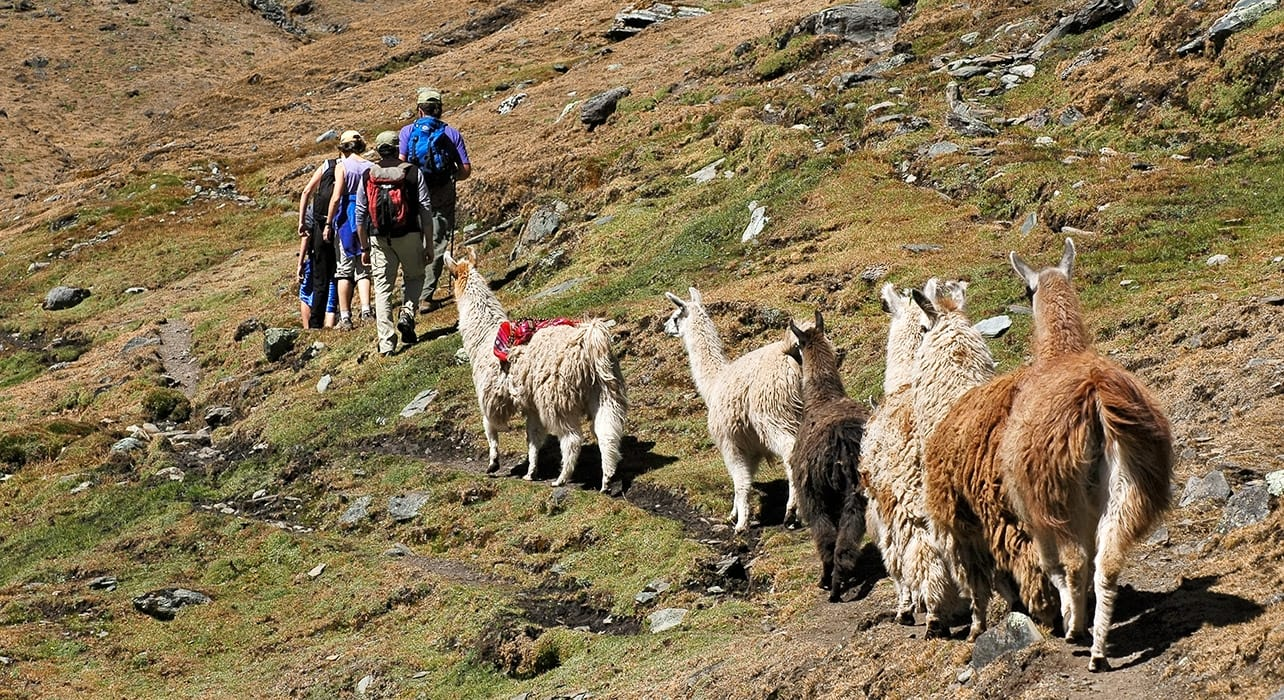 hikers journey llamas peru