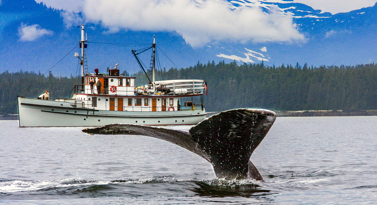 alaska research vessel small boat whale tail