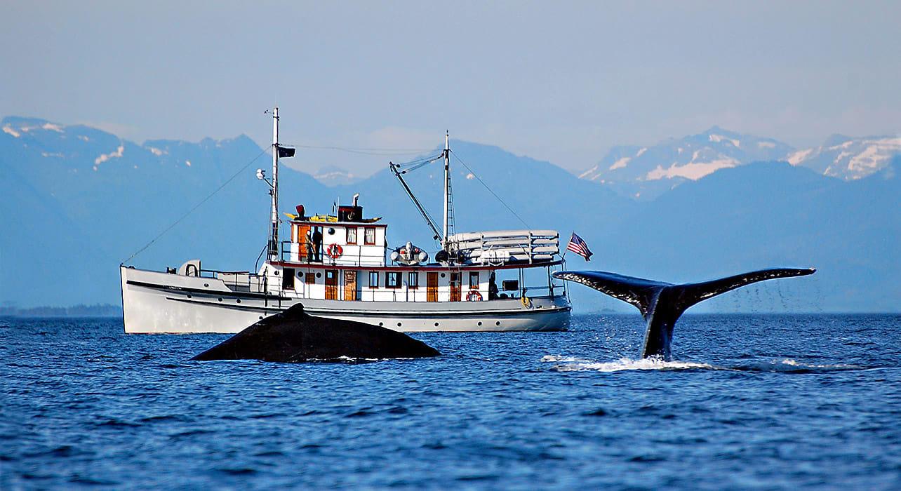 alaska boat whale