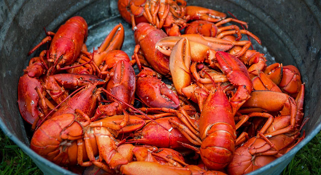 canada new brunswick lobster