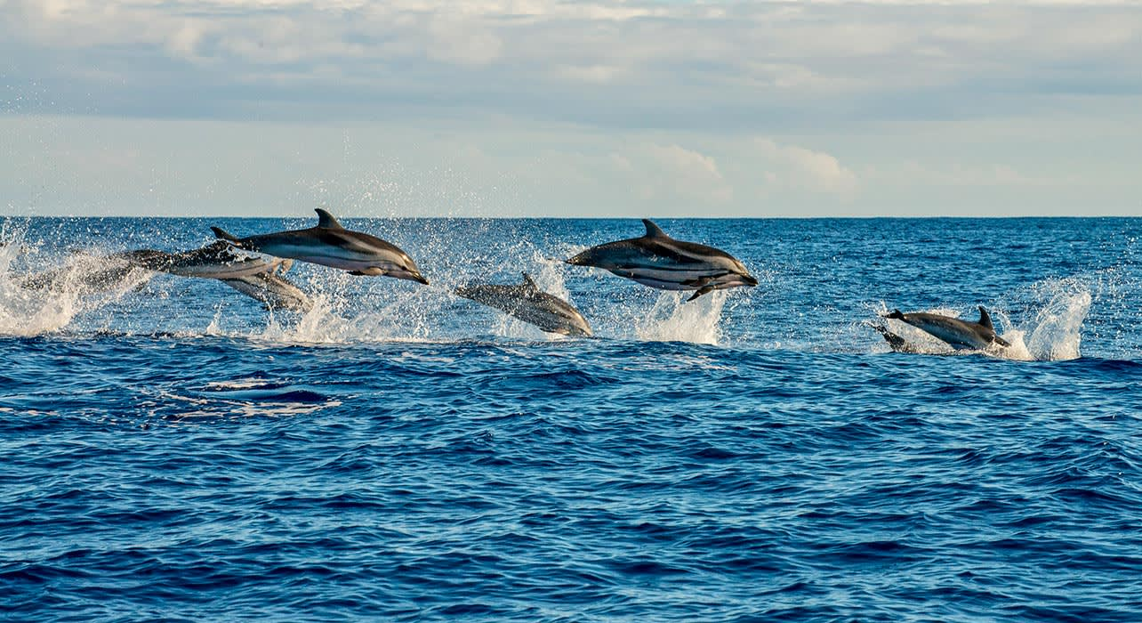 8 slide white sided dolphins pano