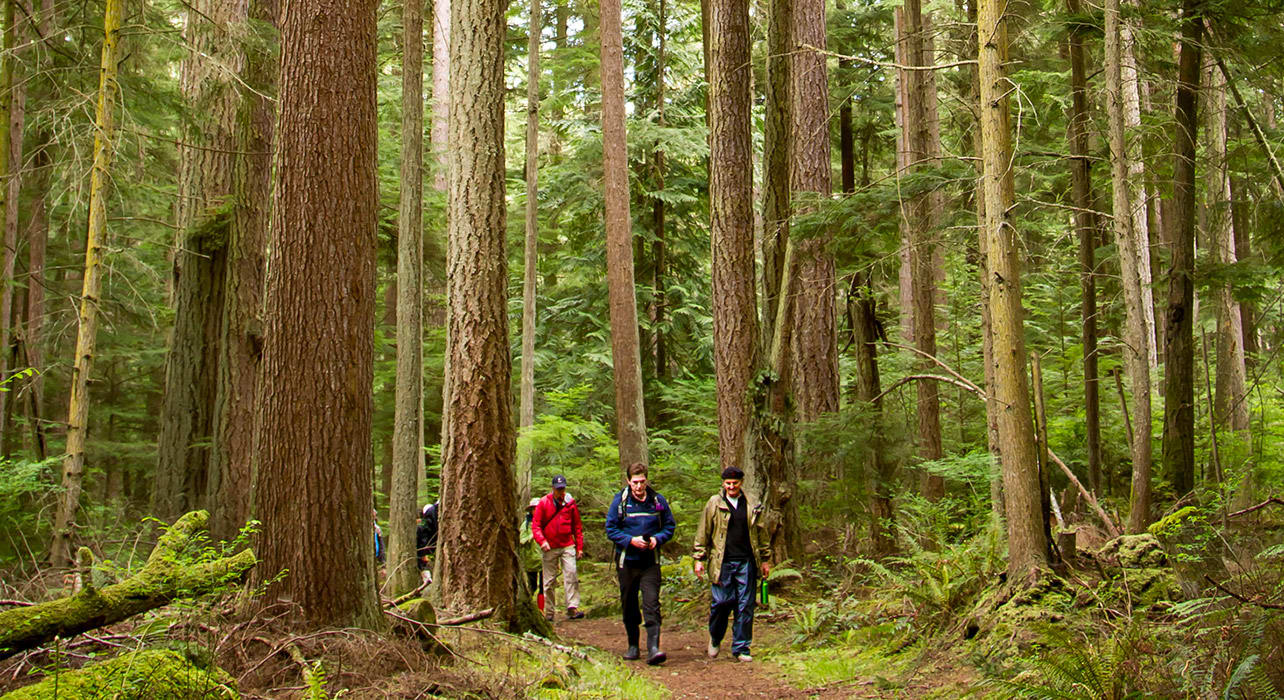 olympic san juan islands forest hike