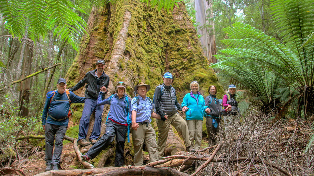 australia tasmania group around large tree