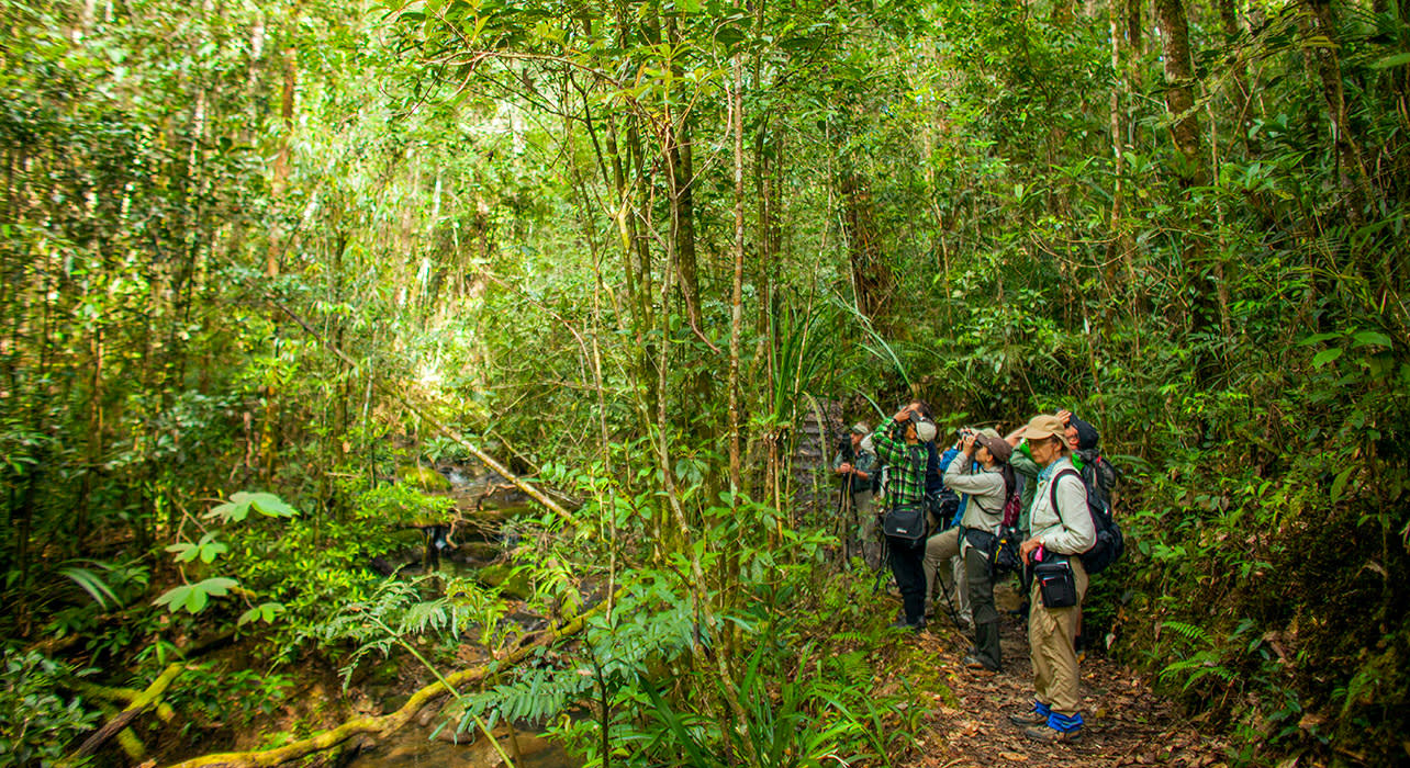 borneo hikers spotting birds wildlife