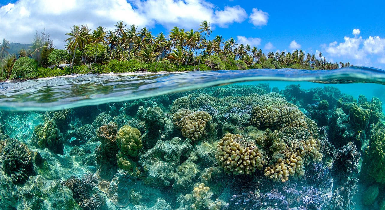 french polynesia coral reef underwater