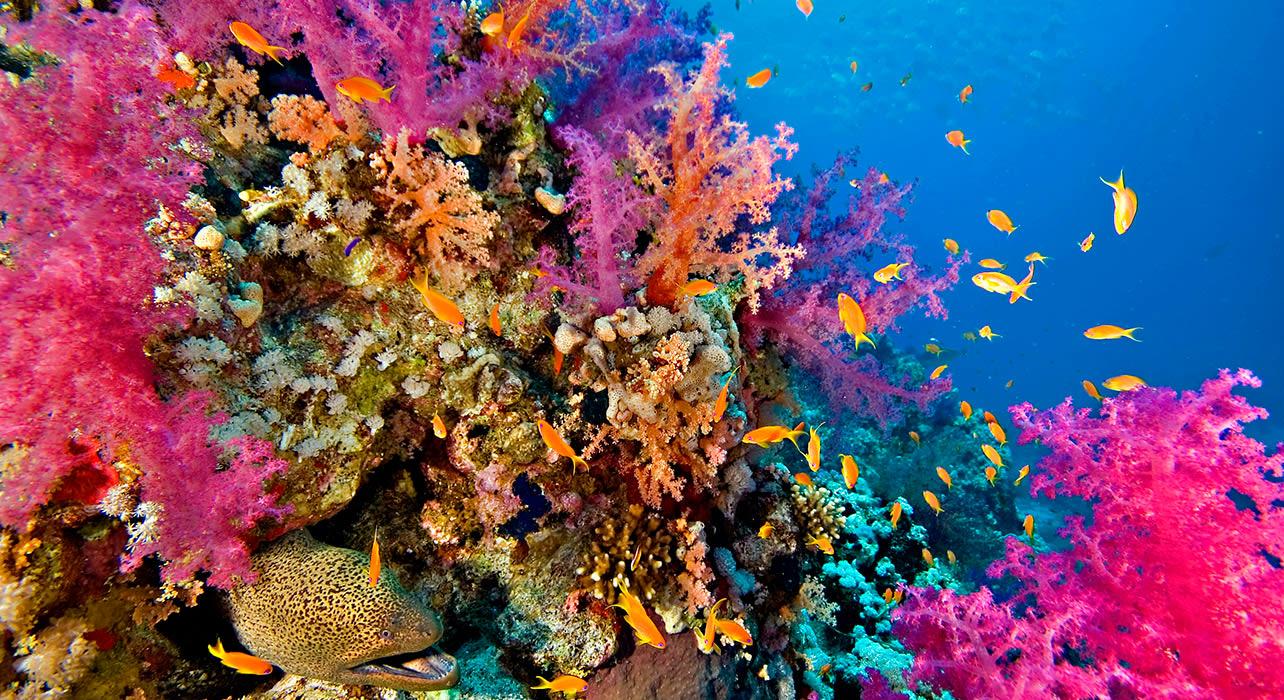 komodo snorkeling coral fish